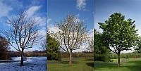 három beszélő fa