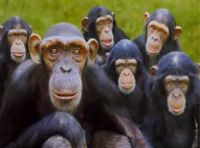 a majmok is tudják