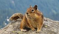 a mókus szabad!