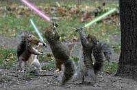 mókusok csatája