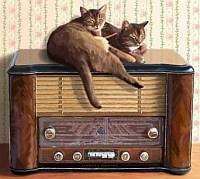 rádióban