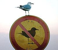 sirály tiltás
