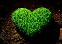 szív meditáció