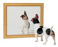 kutya a tükörben