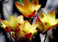 virág szülinap